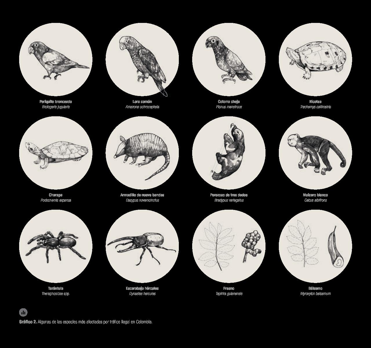 Galería de especies