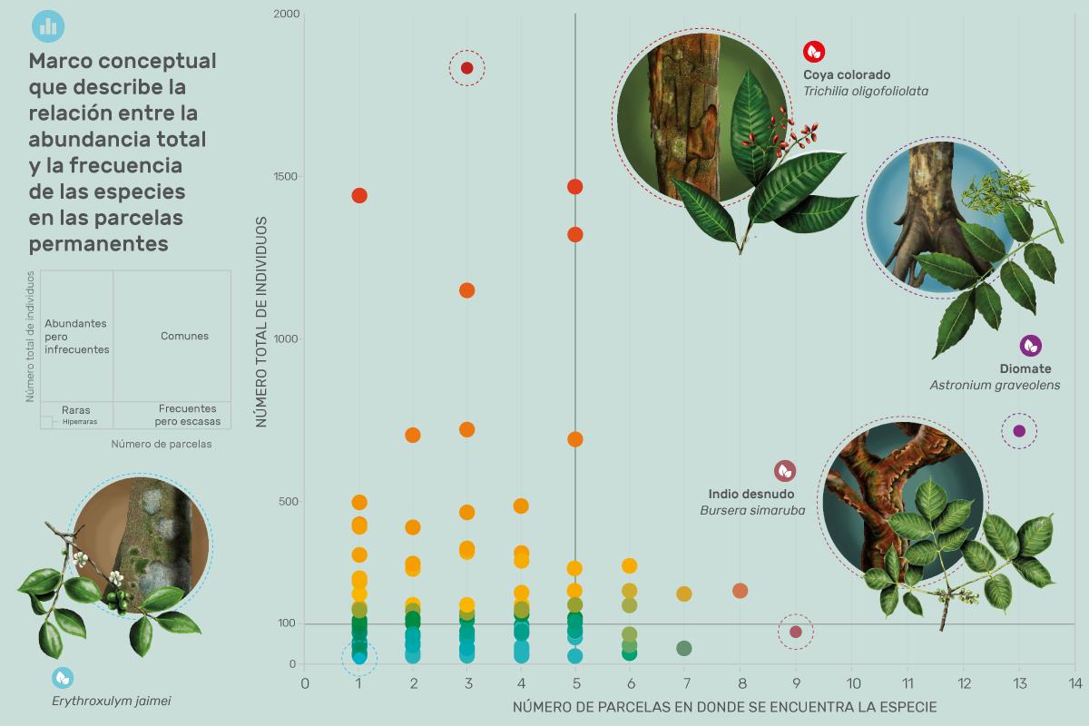 Marco conceptual que describe la relación entre la abundacia total y la frecuencia de las especies en las parcelas permanentes