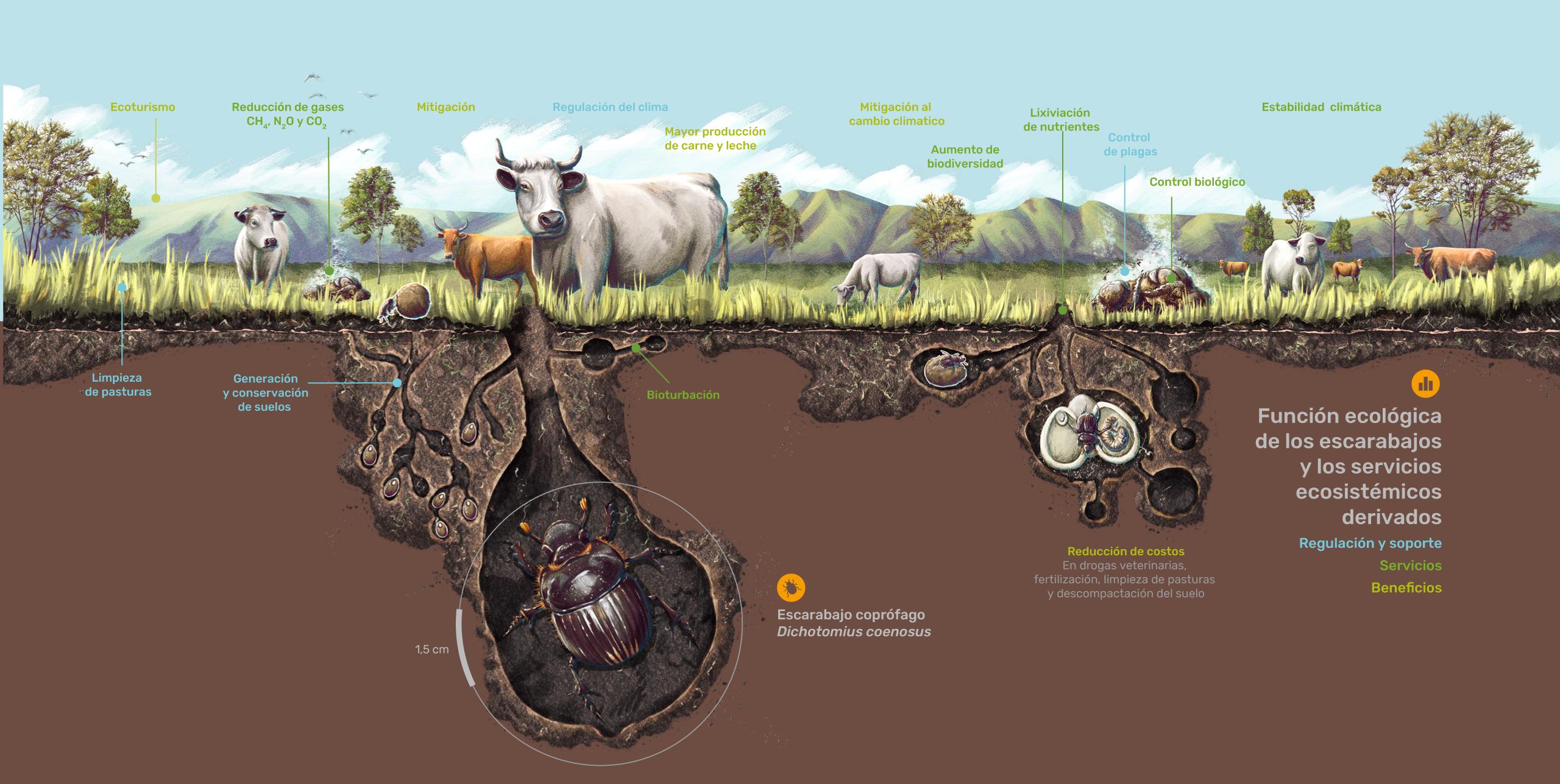 Función ecológica de los escarabajos y los servicios ecosistémicos derivados
